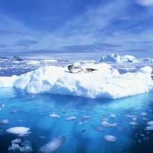 ضد یخ